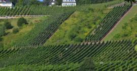 Moezel en Ahrvallei in Duitsland